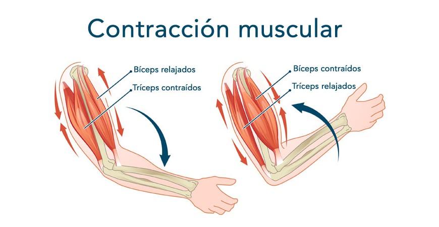 Contracciones musculares ¿Cómo evitarlas con el entrenamiento?